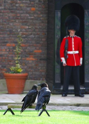 Very valuable ravens