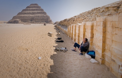 Dogs at the Step Pyramid