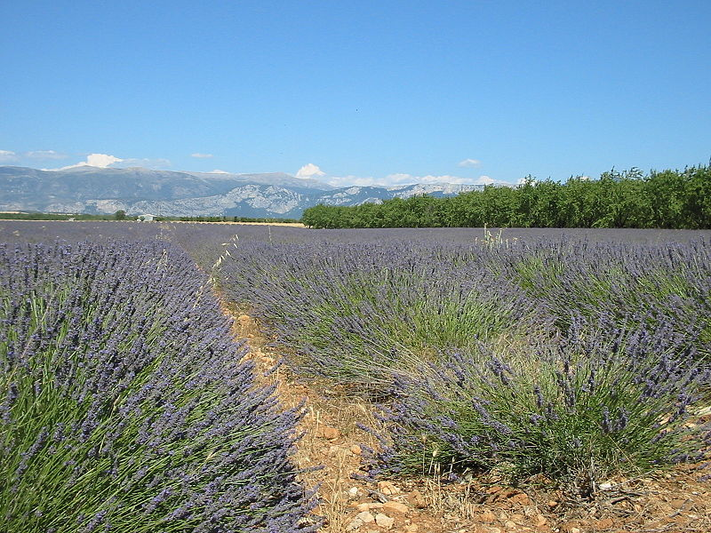 Provence: what a let-down