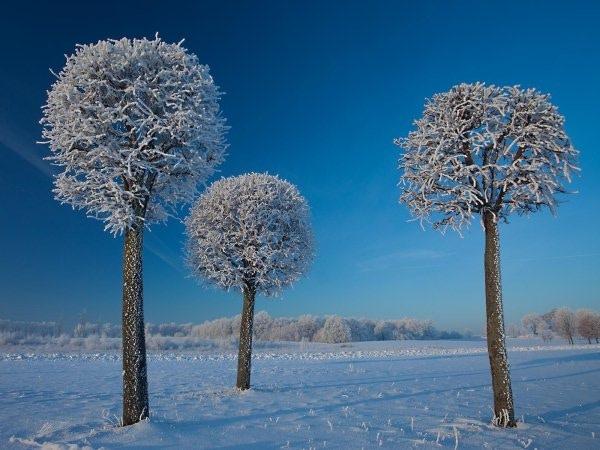 Matas Juras - Lithuania