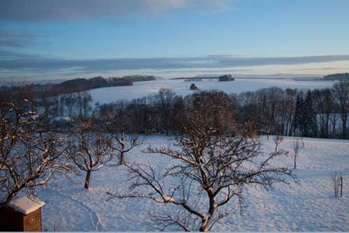 Snowed landscape