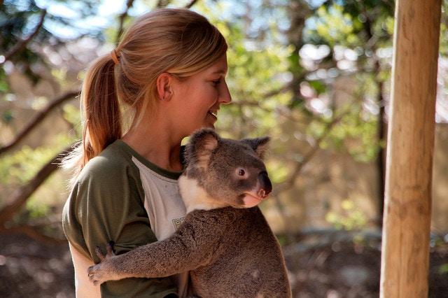 Koala. Australia.