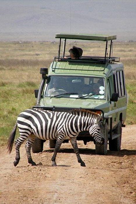 Bernie came across this rather unique zebra crossing whilst on safari in Tanzania. Image c/o Bernie Robinson.