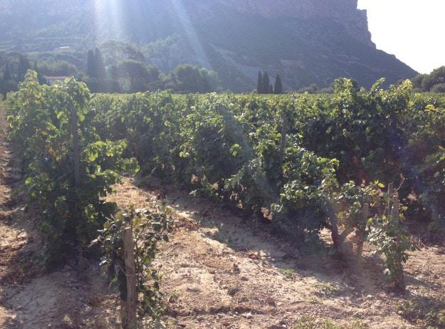 Clos St. Magdeleine vineyard. Image courtesy of Louise Bastock
