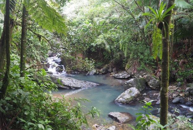 El Yunke rainforest, a lush escape from bustling San Juan © Sarah Reid