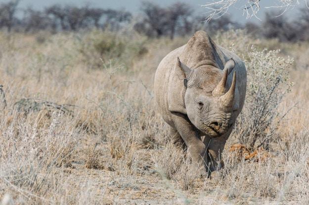 Etosha Game Reserve Self Drive Namibia -142