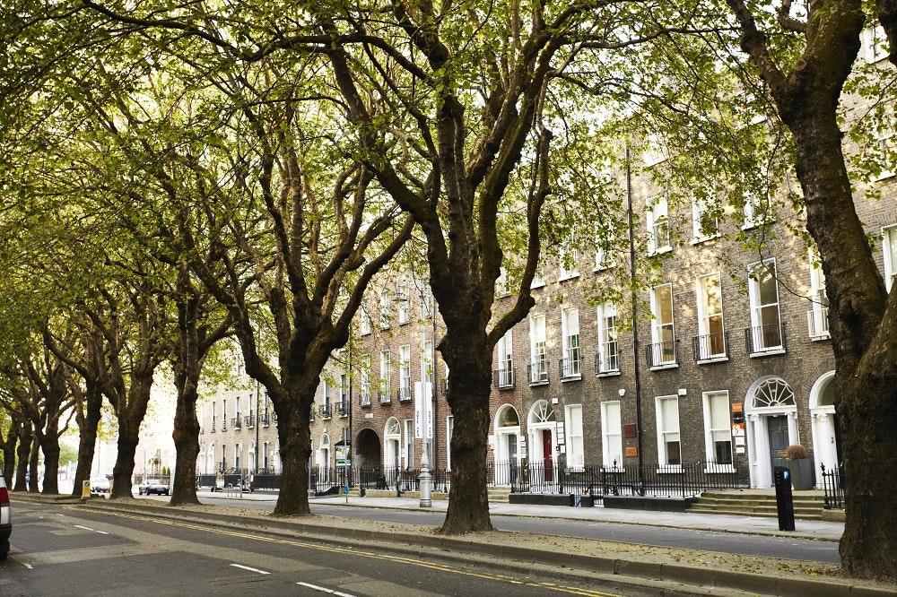 Vine adventures: a glimpse of vibrant Dublin