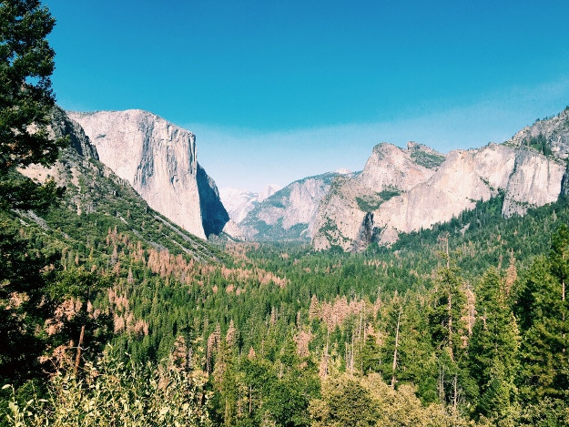 Just back from: Yosemite National Park