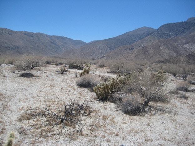Guier-SanDiego-Desert-1