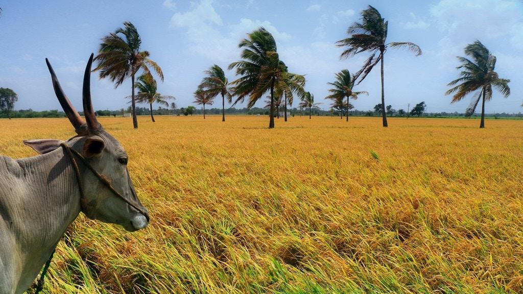 Windswept fields - Udayan Sankar Pal