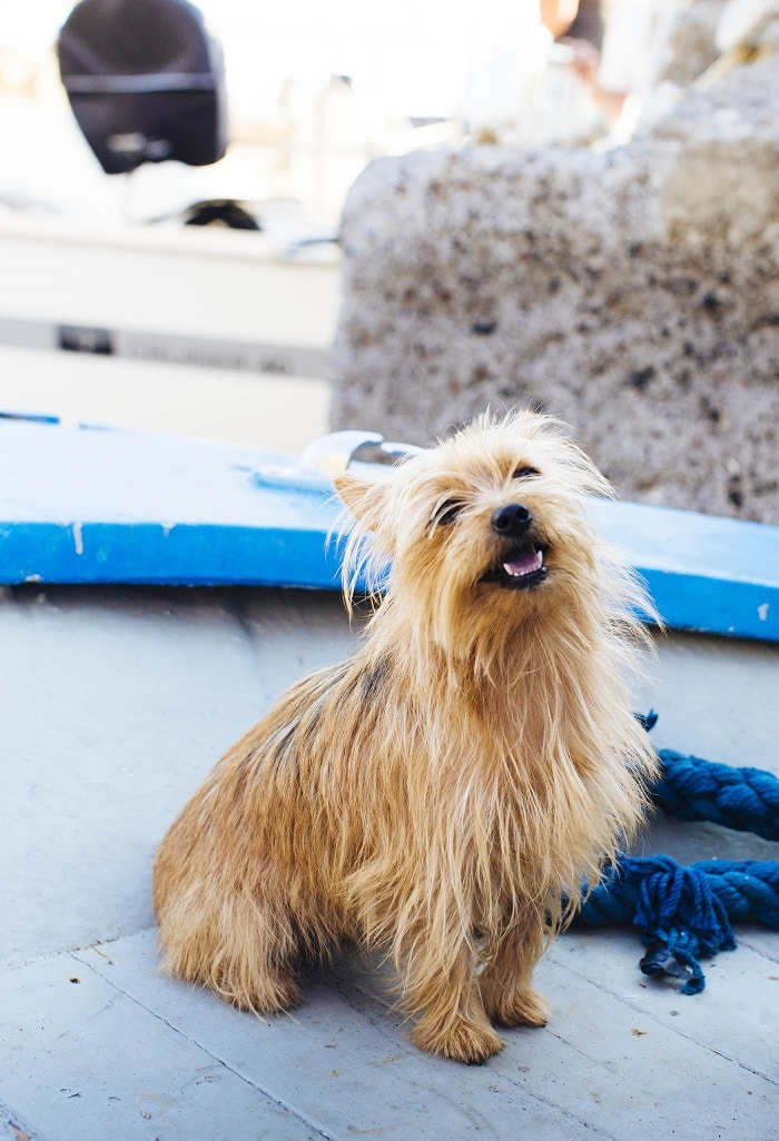 Lana, a fisherman's dog, aboard his boat on the island of Salina © Adrienne Pitts / Lonely Planet