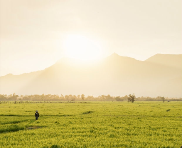Farmer Kai Ketthavong in his rice fields near Wat Phu © Justin Foulkes / Lonely Planet