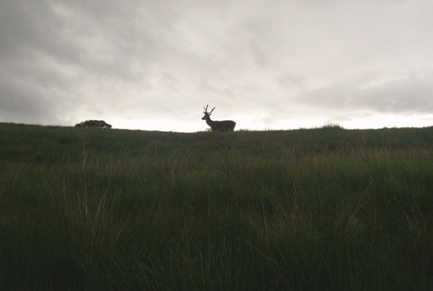A rare Cromie stag silhouetted against moody skies