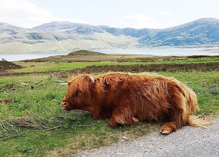Pathfinder pics: wild about the Scottish Highlands