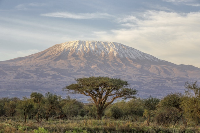 Mt Kilimanjaro and Acacia from Amboseli in Kenya.
