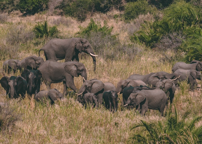 Pathfinder pics: the best moments of my life in South Africa and Zimbabwe