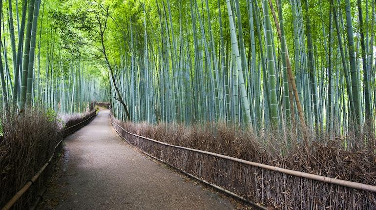Arashiyama Bamboo Grove In Kyoto Japan Lonely Planet