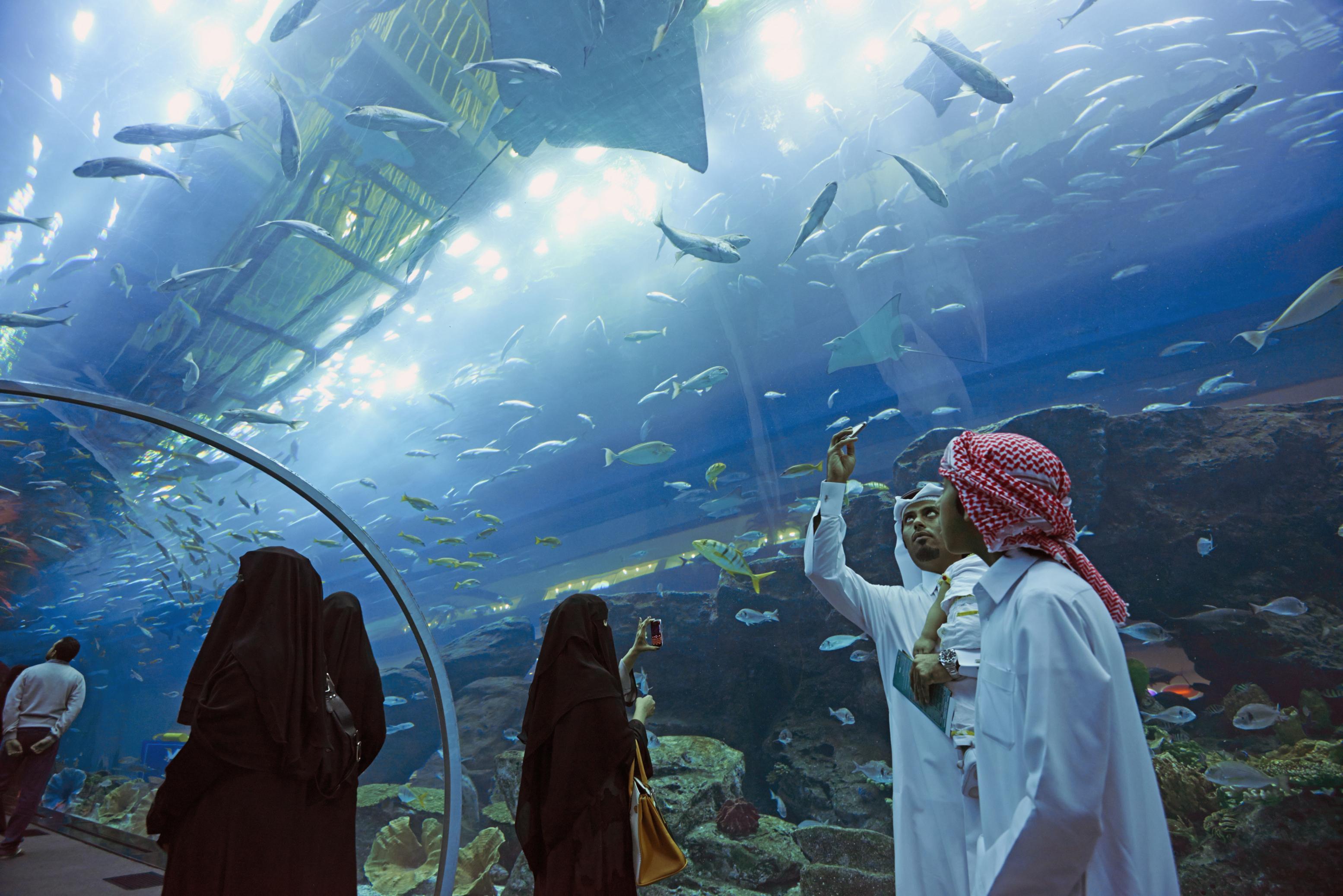 Dubai Aquarium & Underwater Zoo   Dubai, United Arab ...