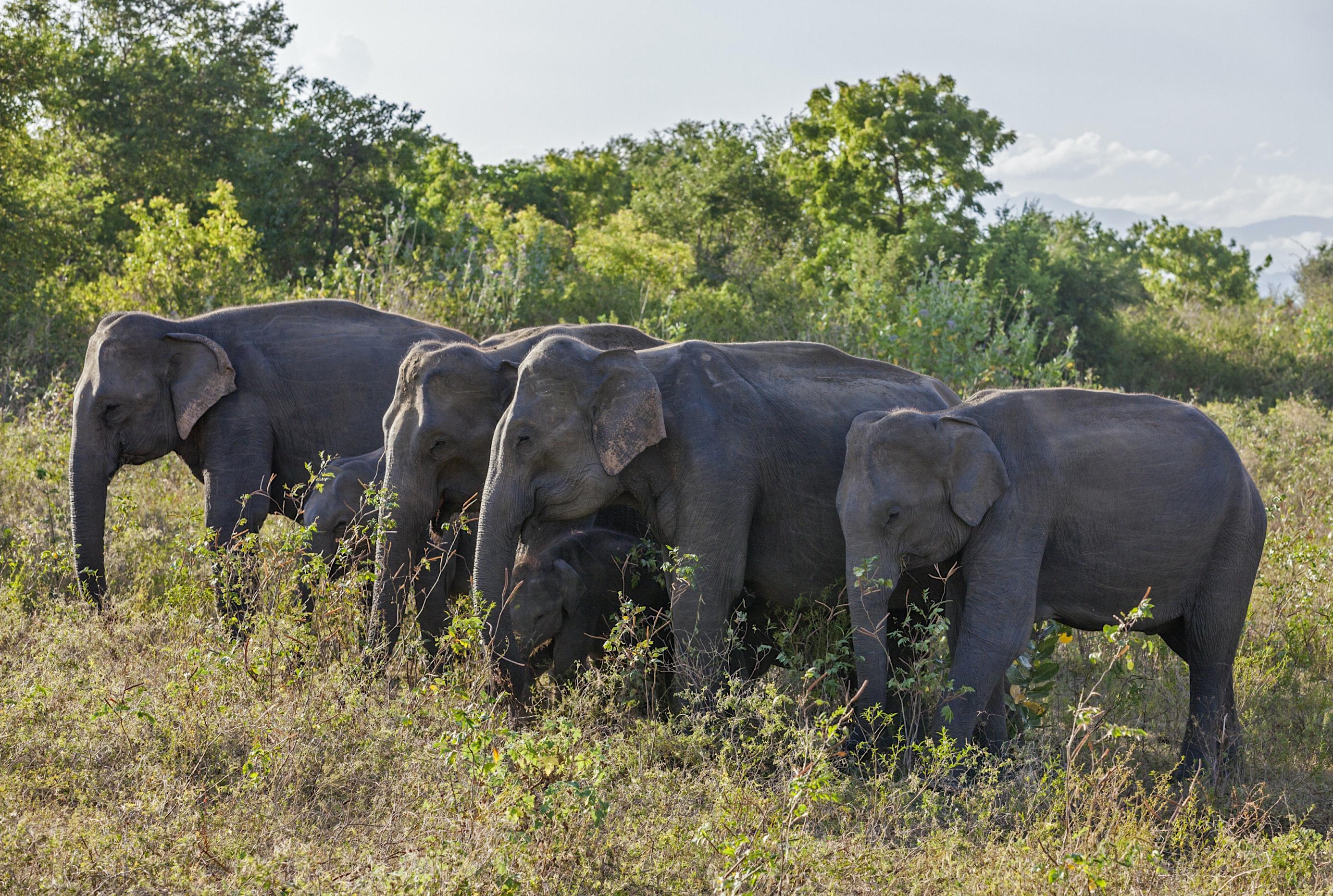 Imageresult for Uda Walawe National Park