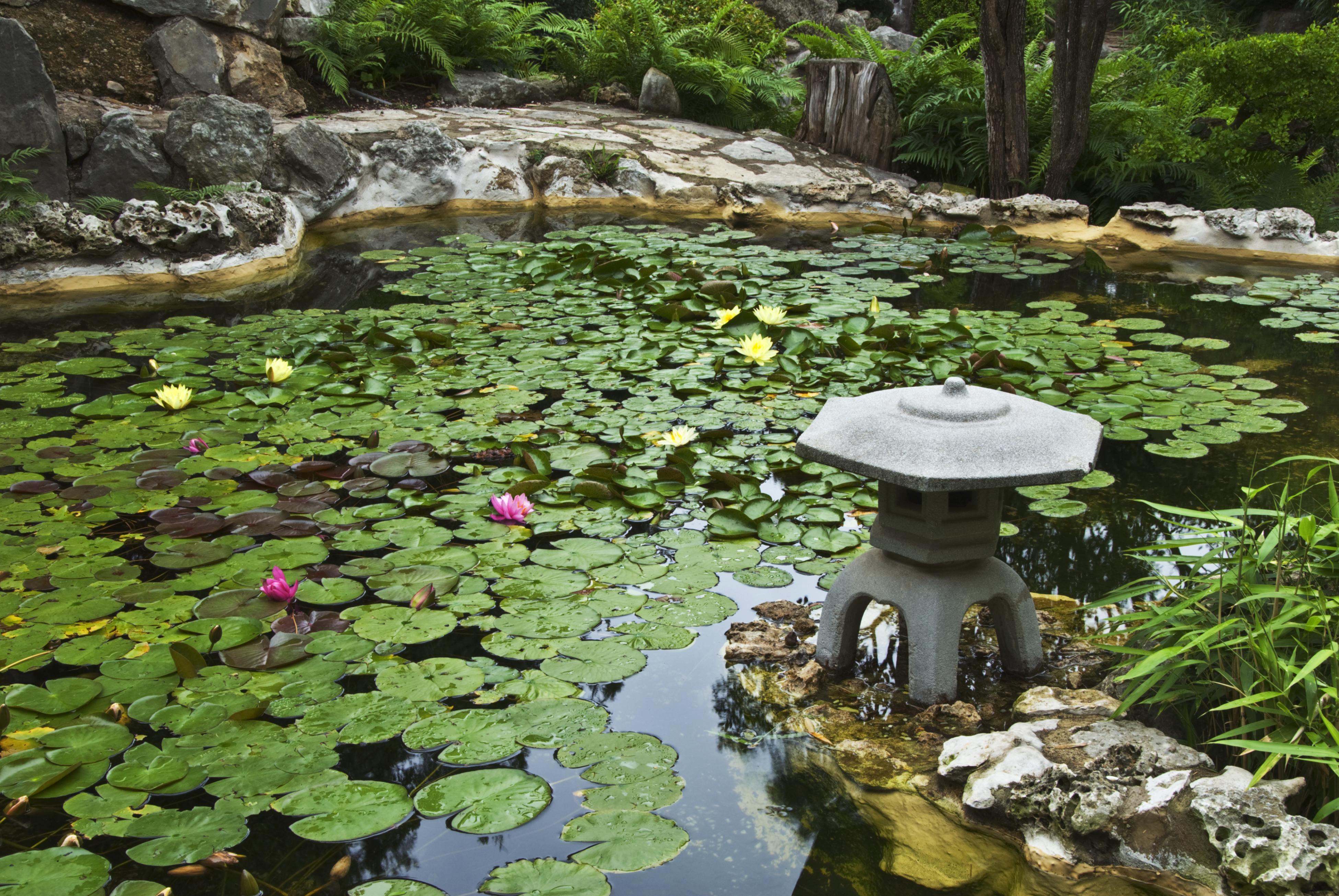 Zilker Botanical Garden Austin Usa Attractions Lonely Planet