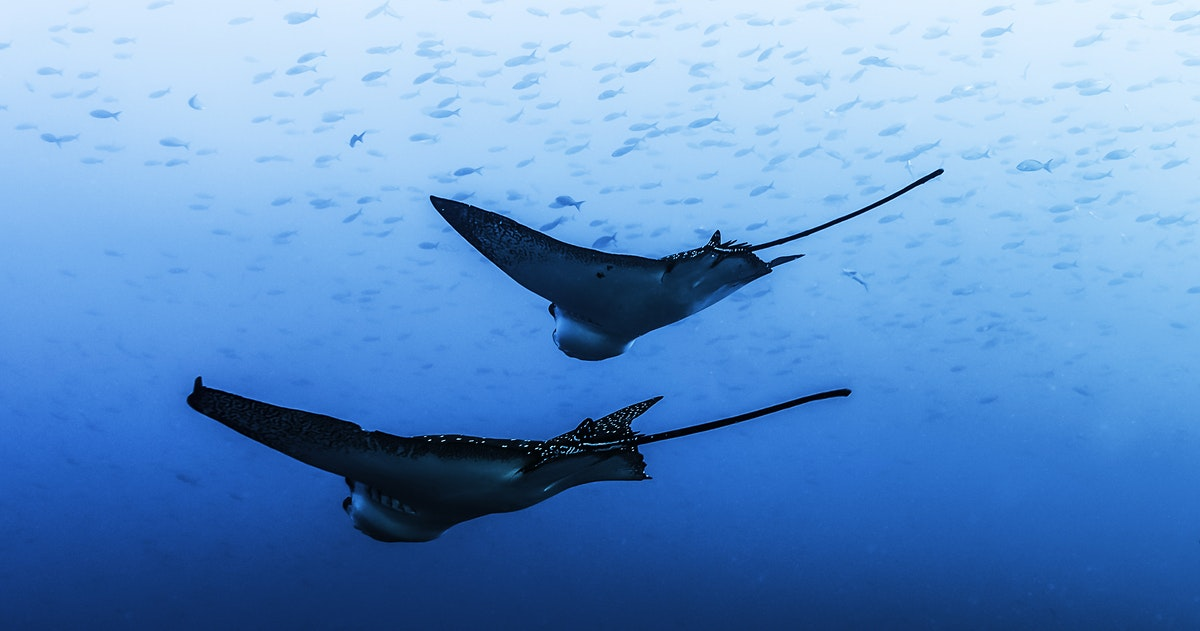 the galápagos islands travel ecuador lonely planet