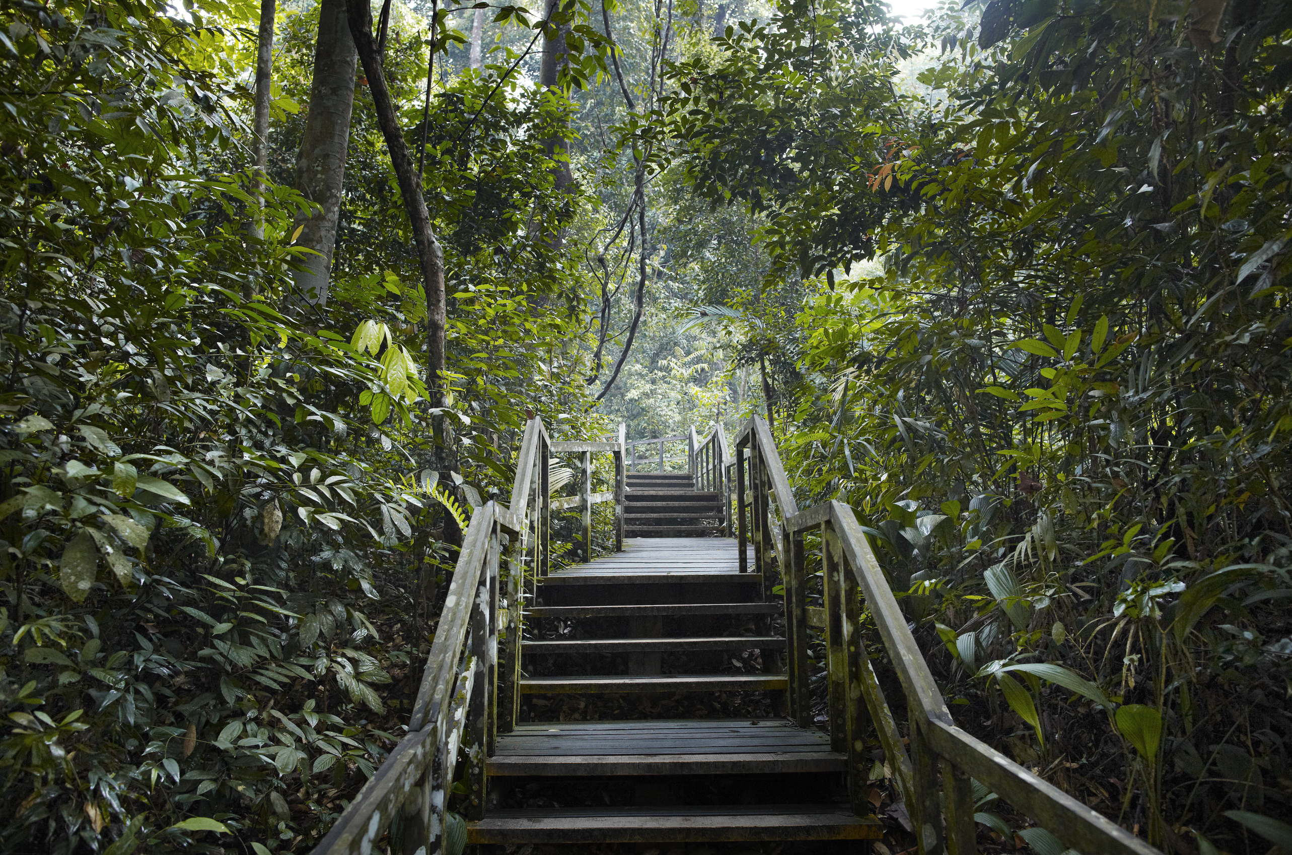 Image result for bukit timah nature reserve