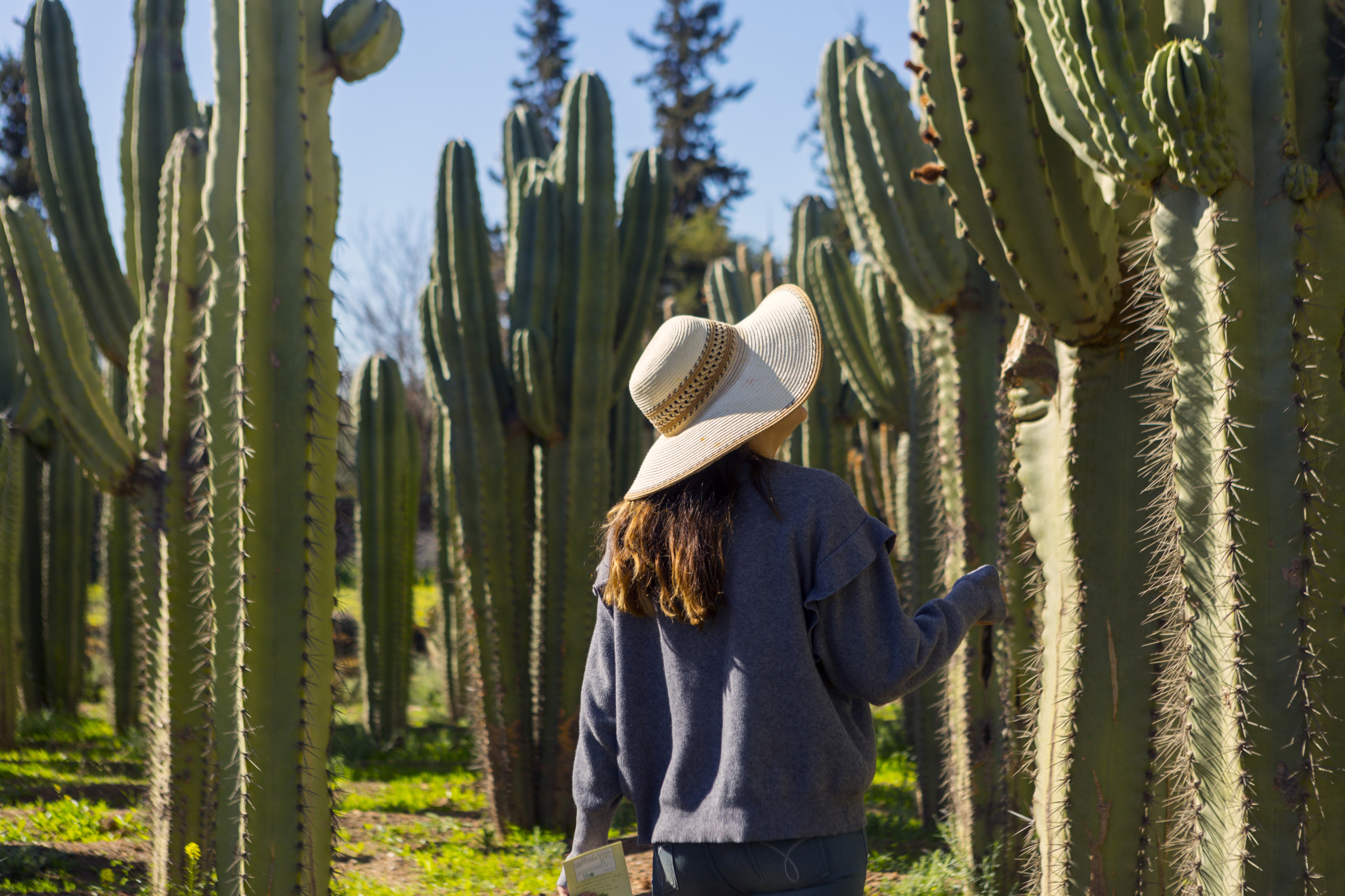 Cactus Thiemann Marrakesh Morocco Attractions Lonely