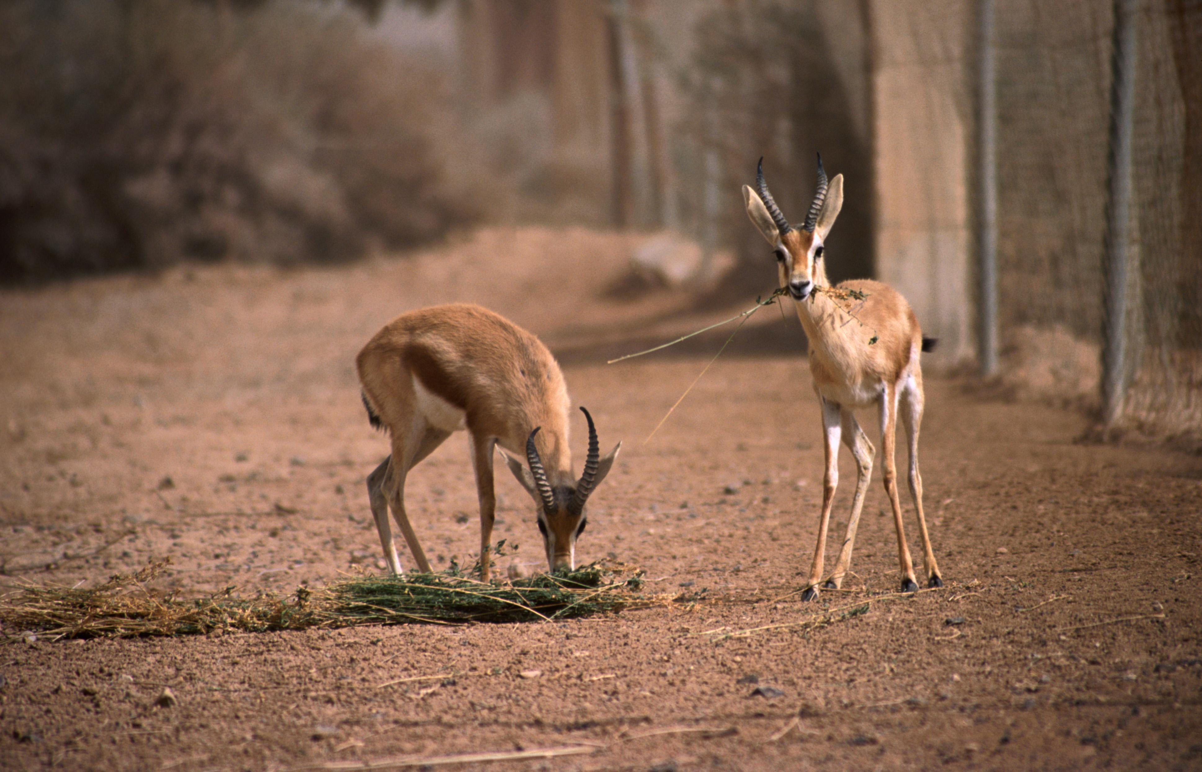 Shaumari wildlife reserve lonely planet fandeluxe Choice Image