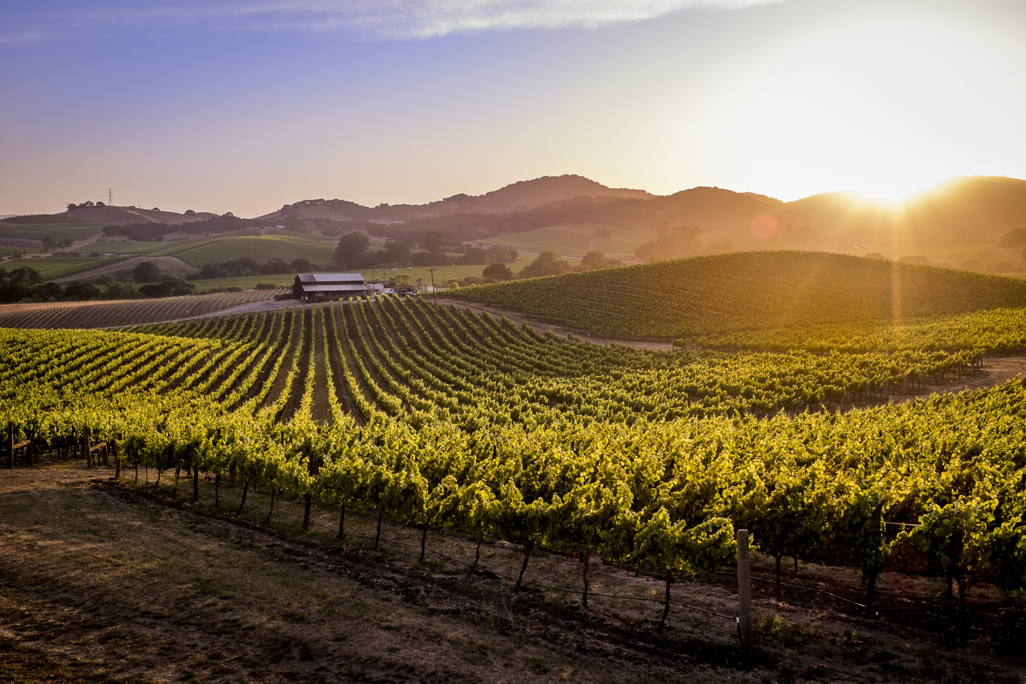Image gallery northern california wine country for California wine