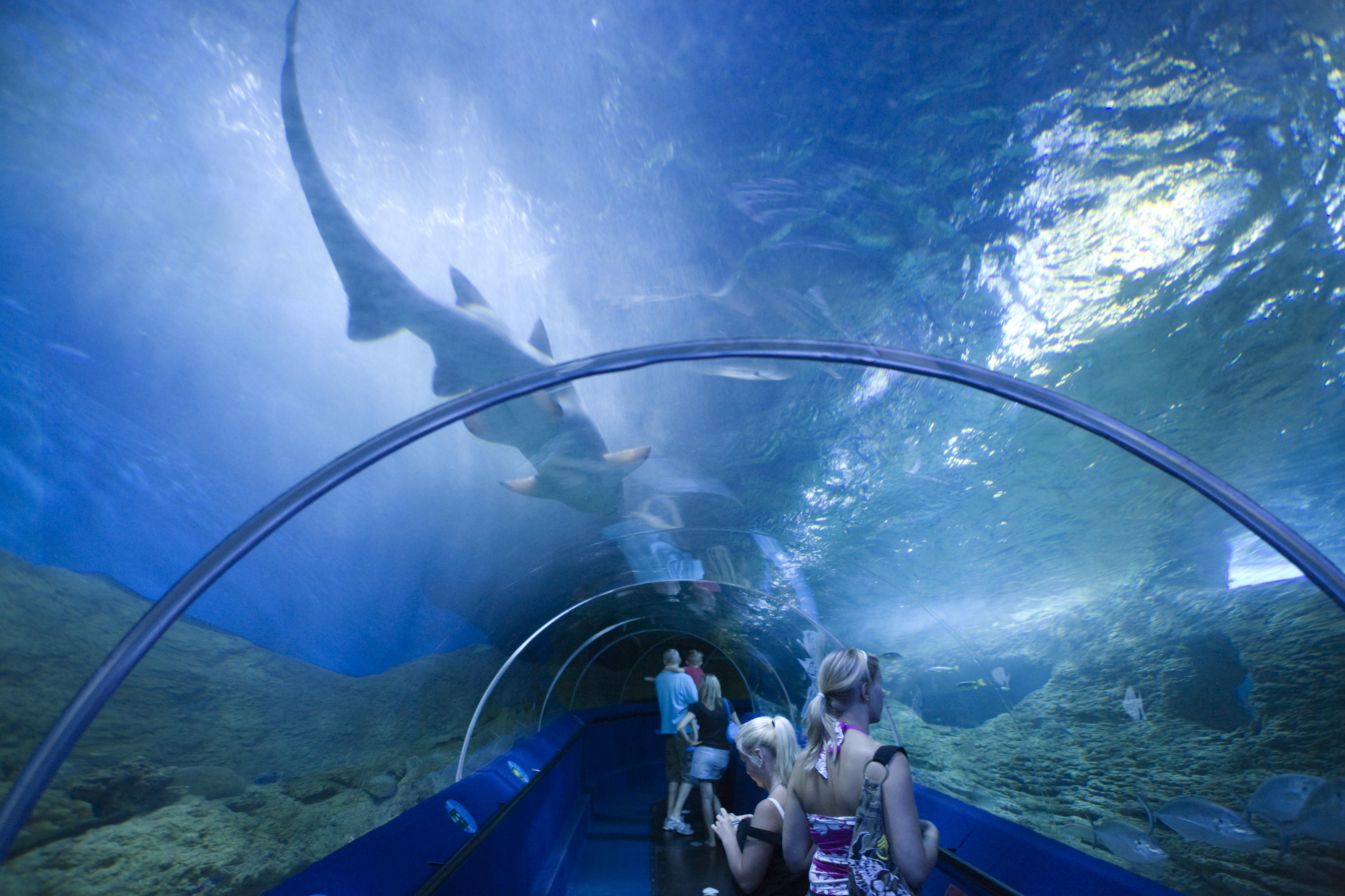 Aquarium of Western Australia | Perth, Australia ...