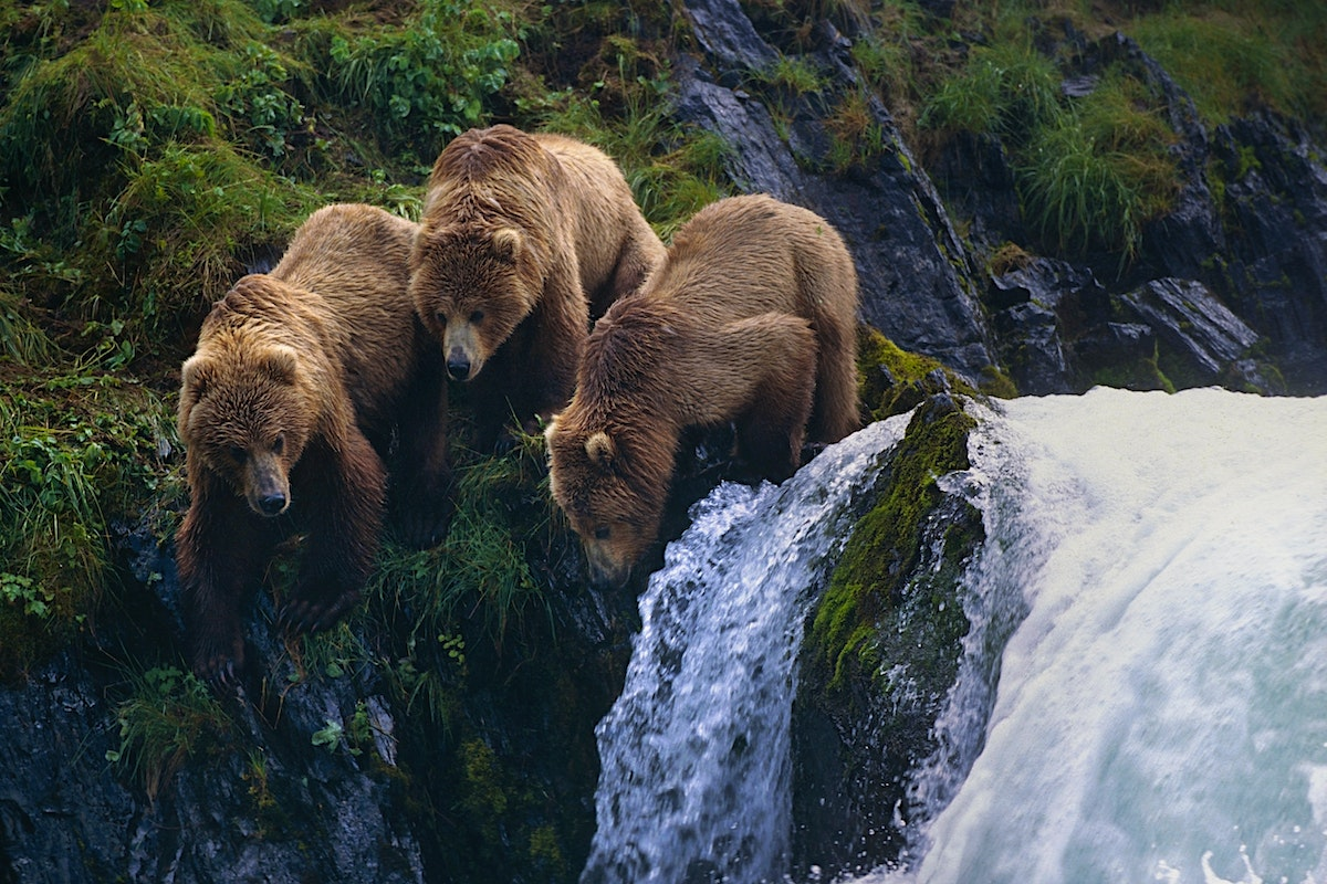 kodiak island travel lonely planet
