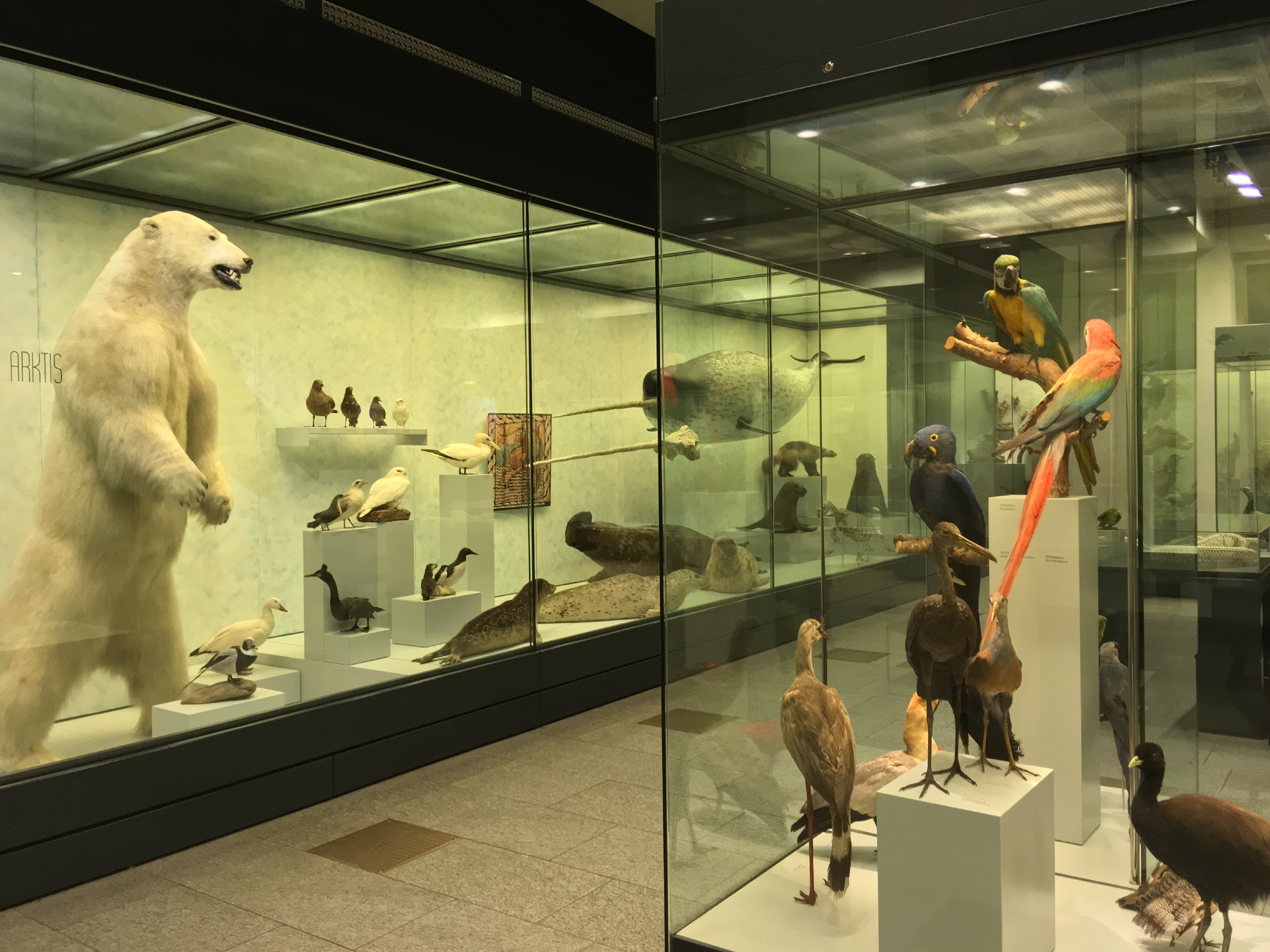 zoological museum kbh sommerland sj
