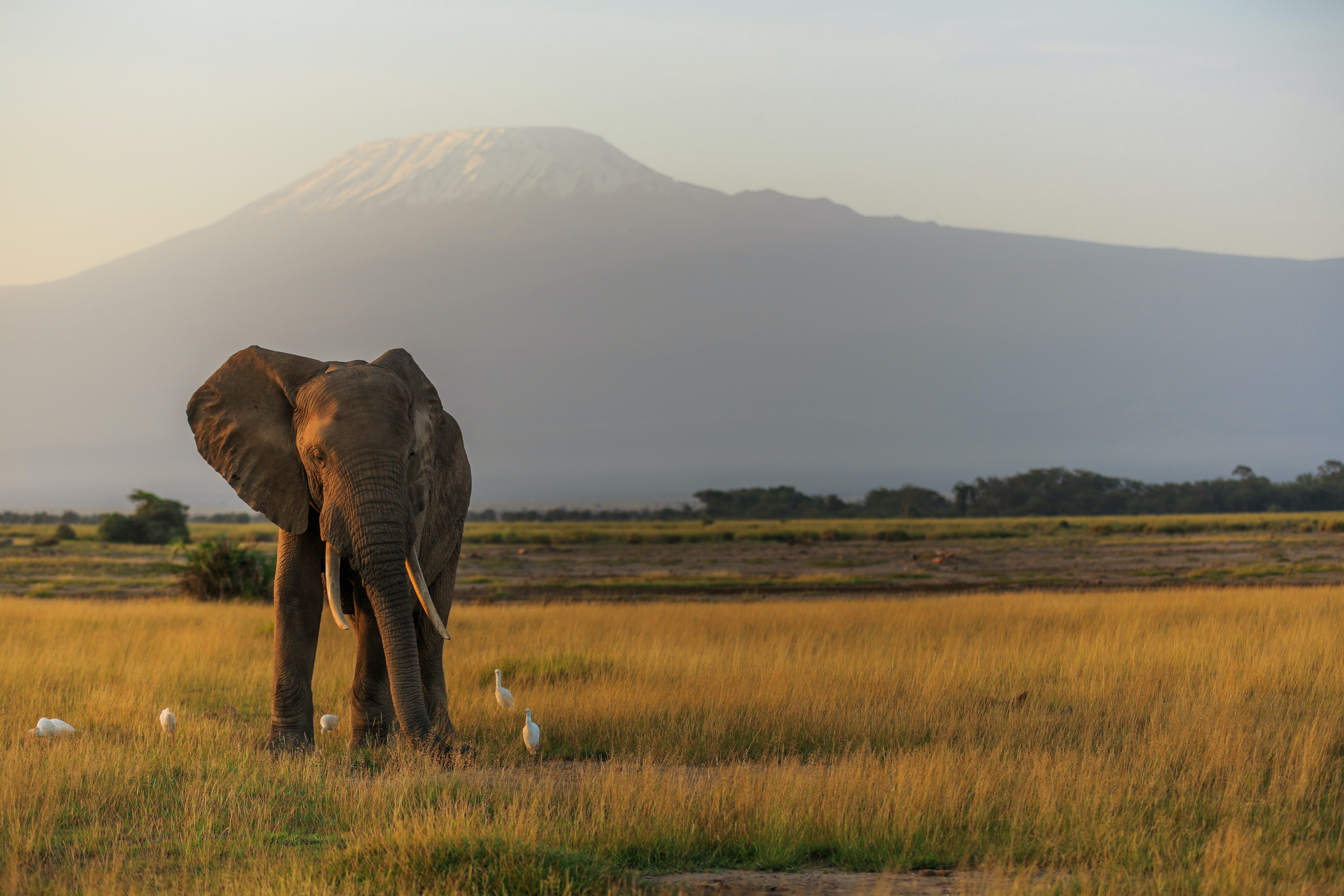 mt kilimanjaro national park travel