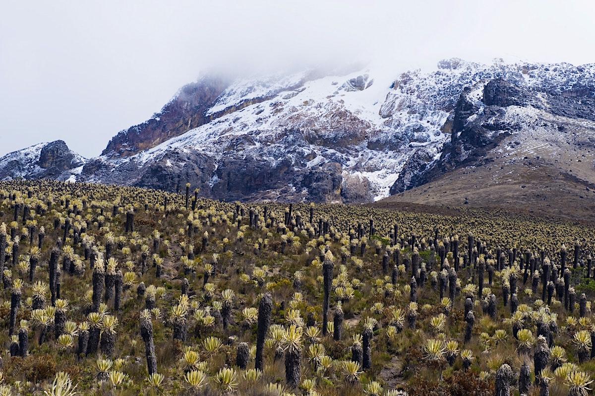 Park - MagXics  Los Nevados National Park