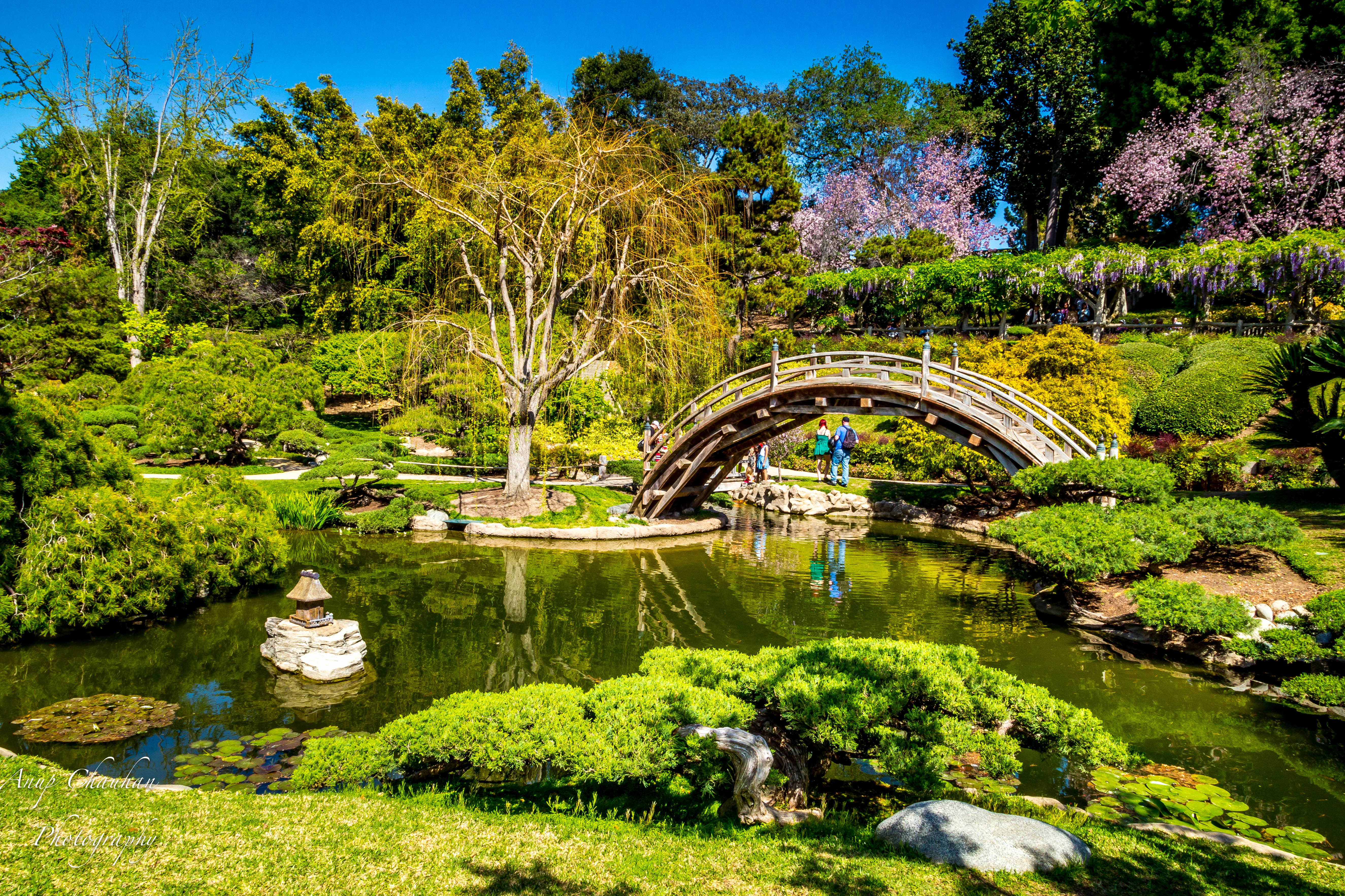 Huntington Library Art Collections Botanical Gardens Los Angeles Usa Attractions Lonely