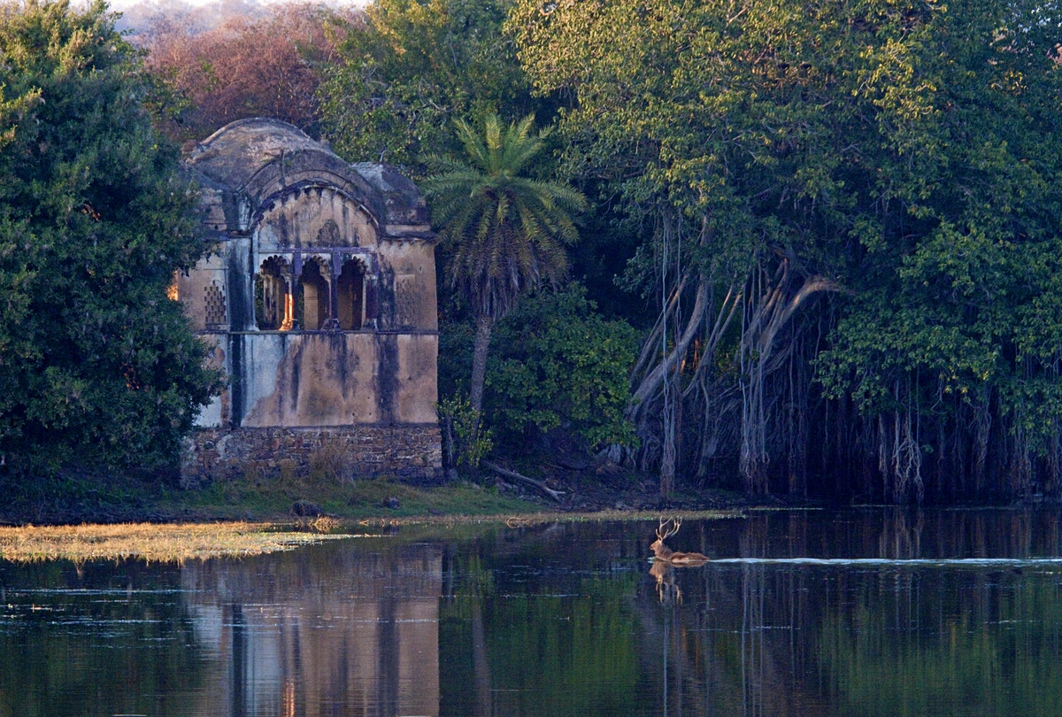 Ranthambhore National Park travel - Lonely Planet