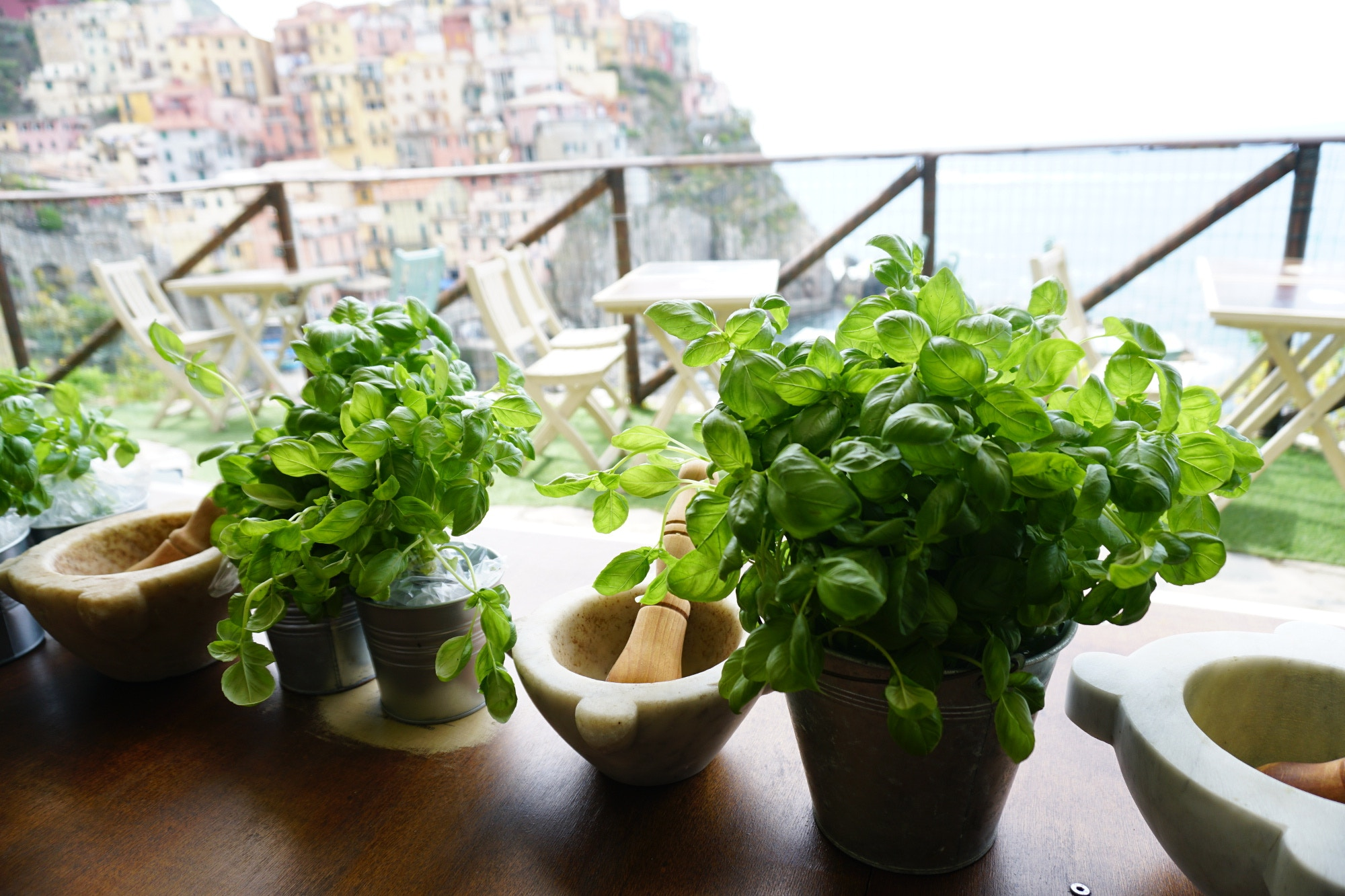 Pesto plants and mortars overlooking Italy's colourful Cinque Terre