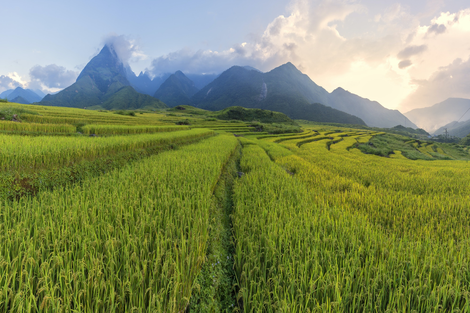 Green rice terraces, with Fansipan Mountain in the background © Ratnakorn Piyasirisorost / Getty Images.
