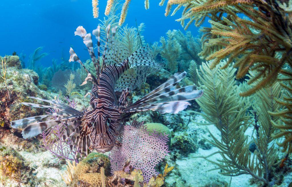 Terumbu karang di Kepulauan Bay | Foto: Johnandersonphoto / Getty Images