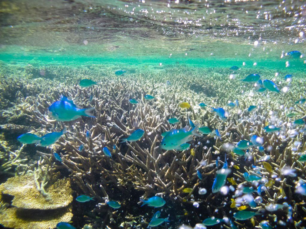 Ikan berwarna warni di sekeliling Iriomote-Jima | Foto: Ippei Naoi / Getty Images