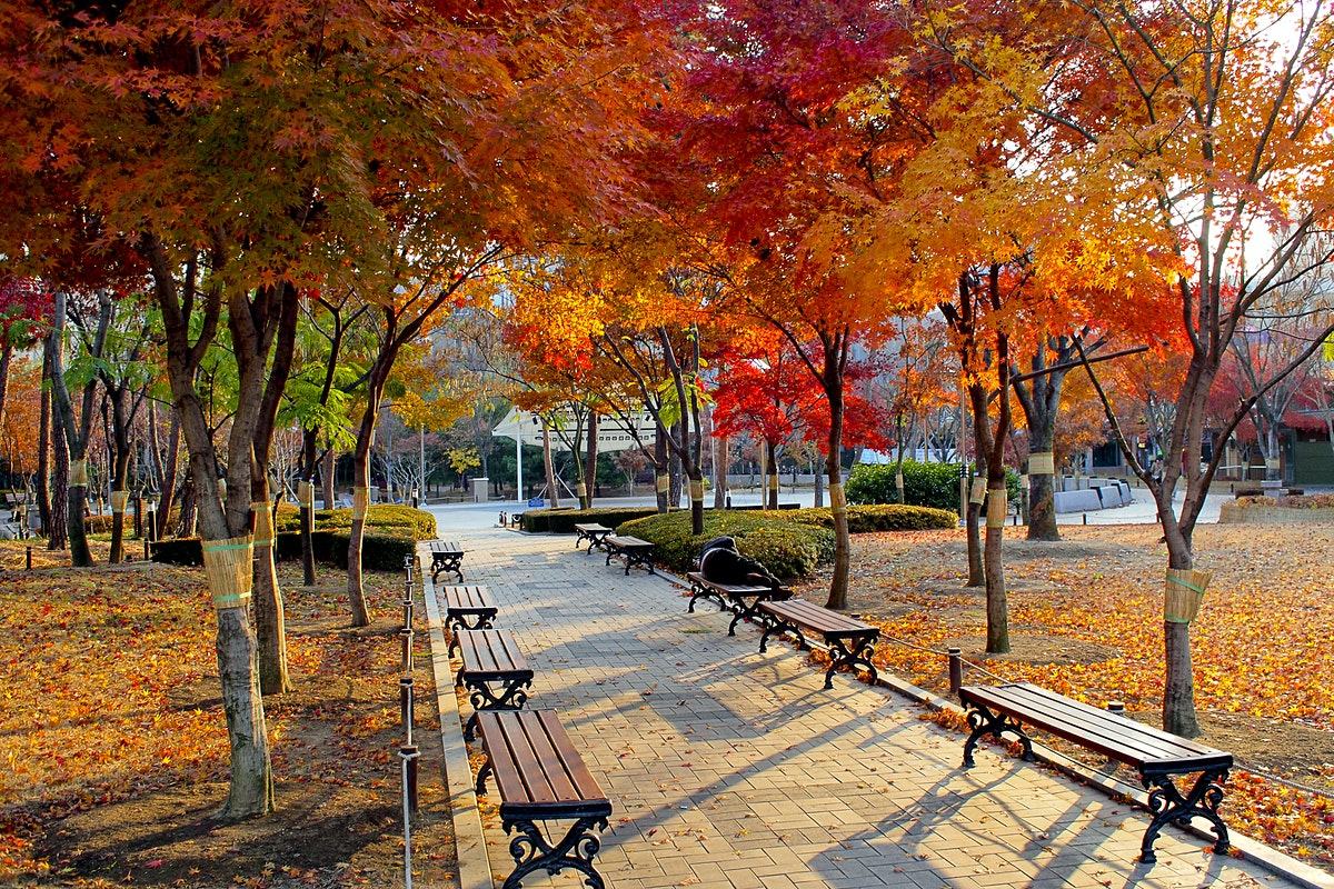 Daegu Travel Gyeongsangbuk Do South Korea Lonely Planet