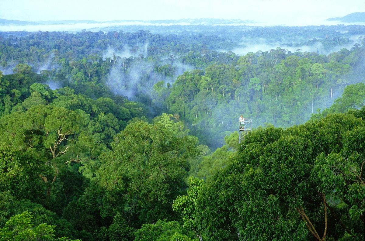 Ulu Temburong National Park travel   Temburong District