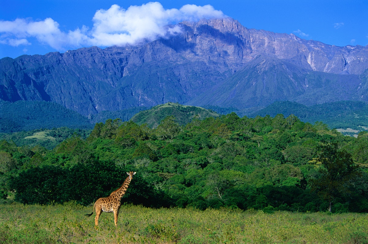 Arusha National Park Travel Northern Tanzania Tanzania Lonely Planet