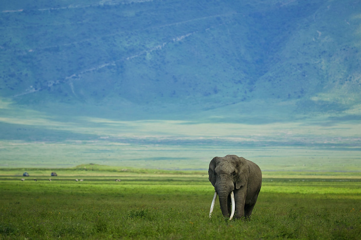 Tanzania Travel Lonely Planet