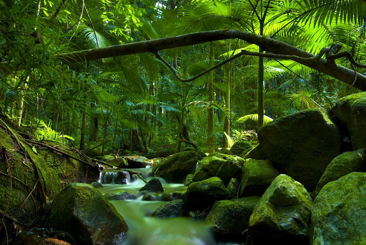 The daintree travel lonely planet for Australian rainforest