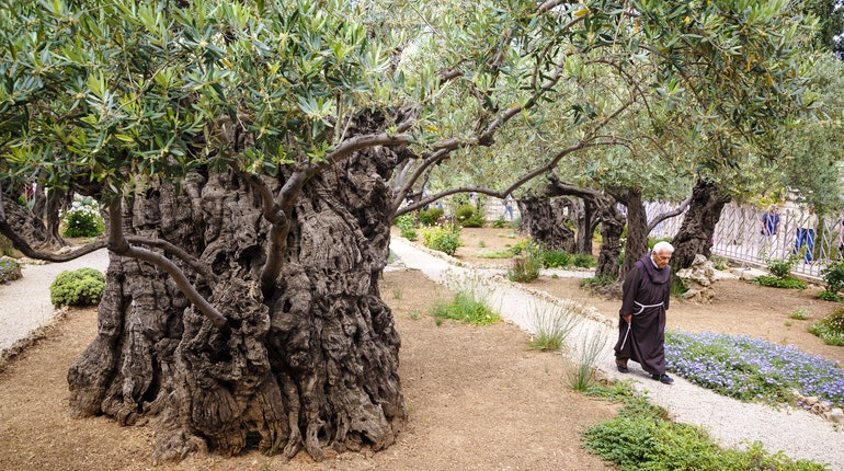 All Star Auto Insurance >> Garden of Gethsemane in Jerusalem - Lonely Planet