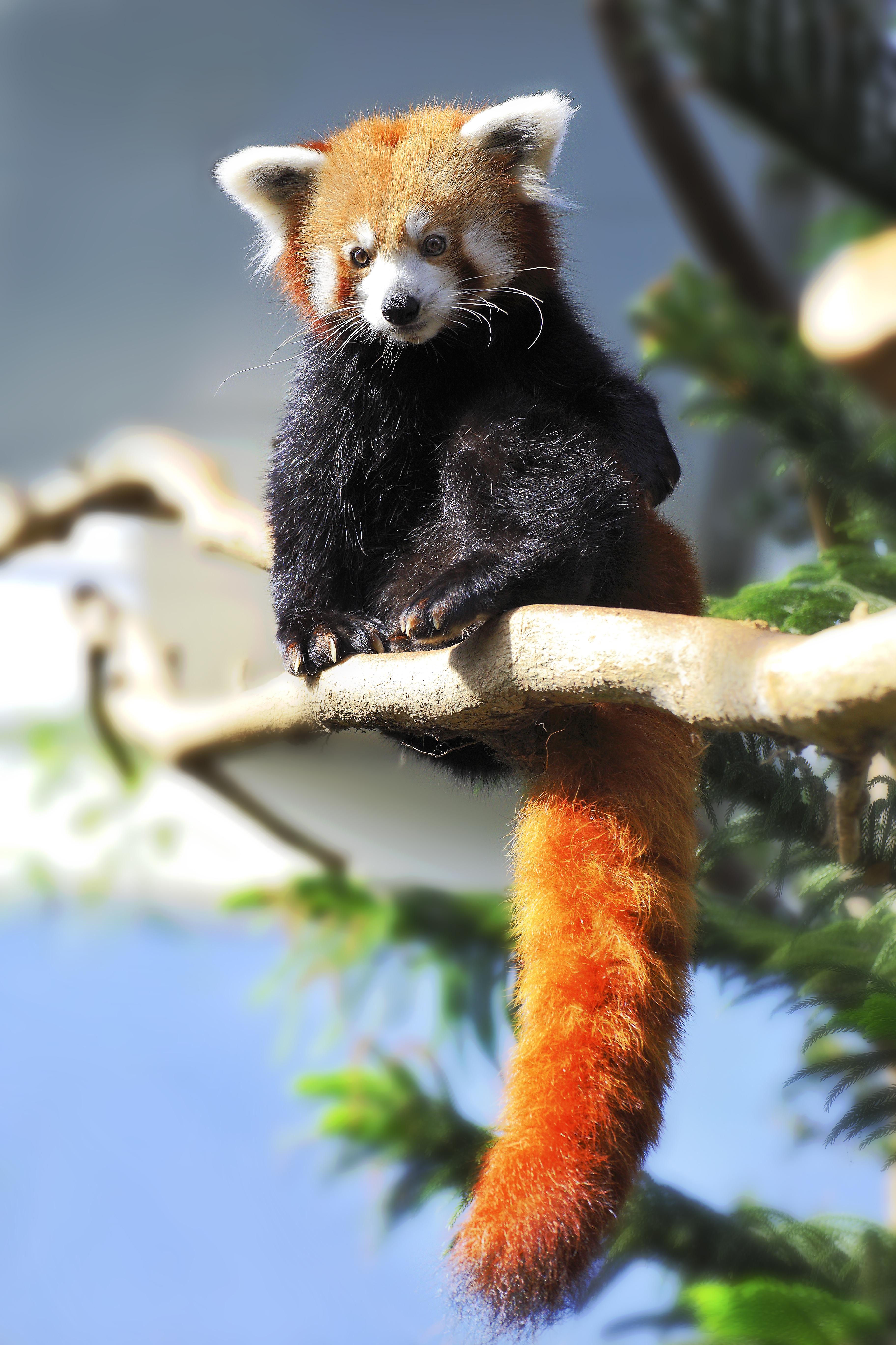 Panda movies eu adult