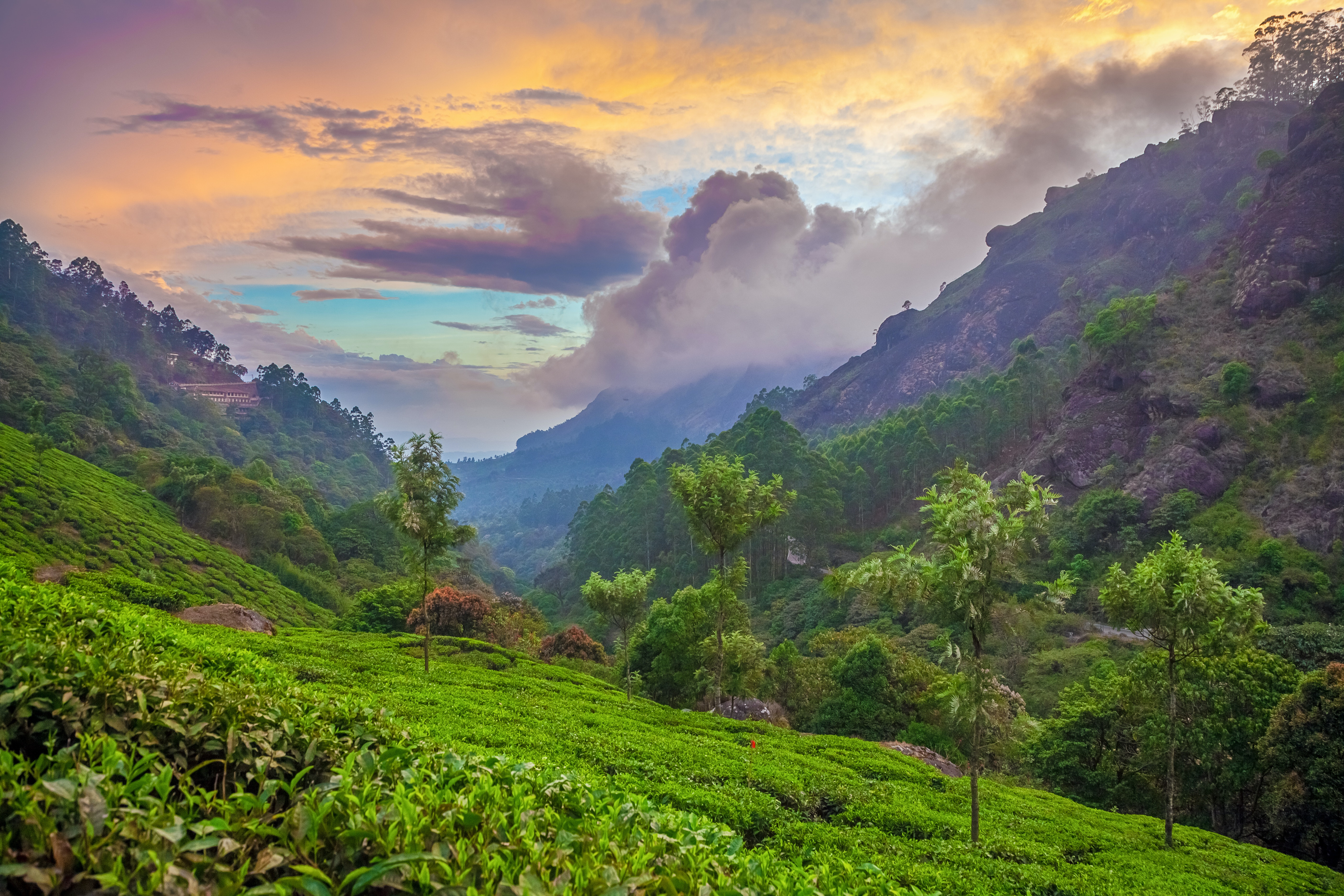 Munnar travel - Lonely Planet