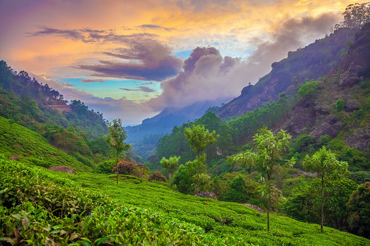 Munnar Travel Kerala India Lonely Planet