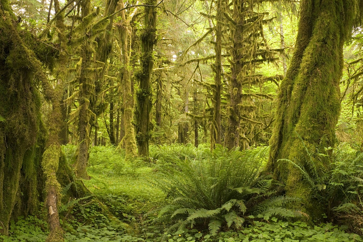 Northwestern Car Insurance >> Olympic Peninsula travel - Lonely Planet